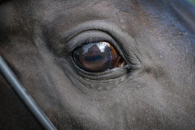 Pferdonline Auge Dagostini