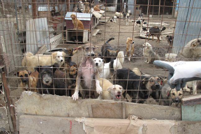 Hunde Shelter Rumänien